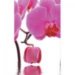 2 броя в пакет, завеси-японска стена,плътна и тънка, всяка с размер 245x45см. за окачване на ПВЦ или алуминиева релса,орхидея, код-80423