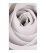 2 броя в пакет, завеси-японска стена,плътна и тънка, всяка с размер 245x45см. за окачване на ПВЦ или алуминиева релса,роза, код-80422